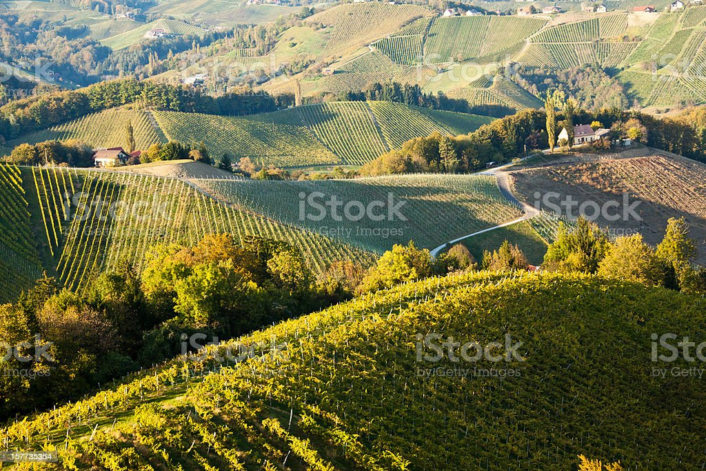 Rolling hills at a vineyard in Styria, Austria stock photo