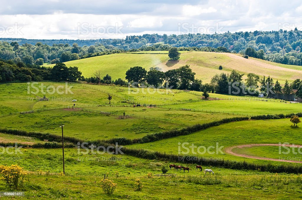 Rolling hills in the summer near Guildford, Surrey, England, UK stock photo