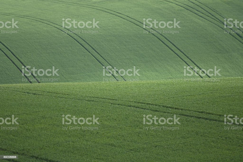 Rolling hills of cereal crops royalty-free stock photo