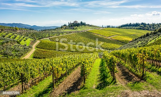 Tuscan hills covered with vines for winemaking in the Chianti region of Italy.  Focus on the foreground vines.