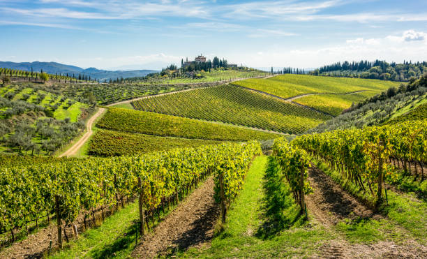 böljande kullar av toskanska vingårdar i regionen chianti vinet - vineyard bildbanksfoton och bilder