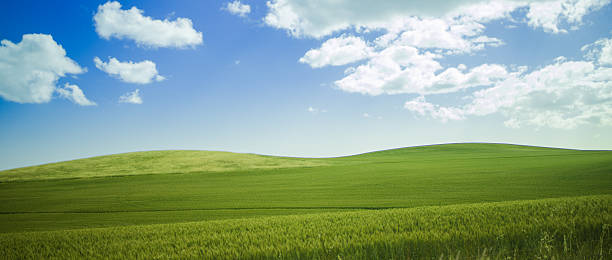 Rolling Hills Landscape of green grassy hills in Western Australian farm land. grass area stock pictures, royalty-free photos & images