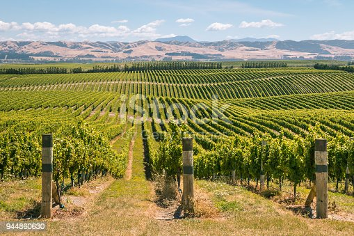 rolling hills with vineyards in Marlborough region, South Island, New Zealand