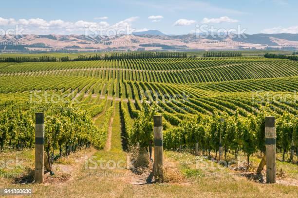 Photo of rolling hills with vineyards in Marlborough region, New Zealand
