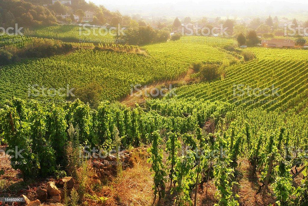 Rolling Hillside Vineyards stock photo