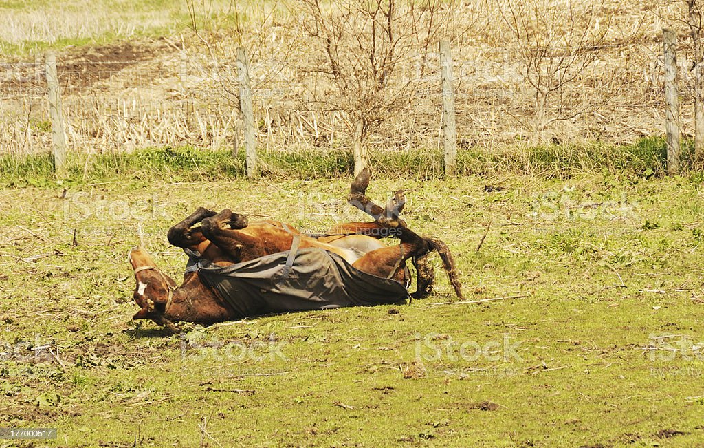 Rolling Horse stock photo