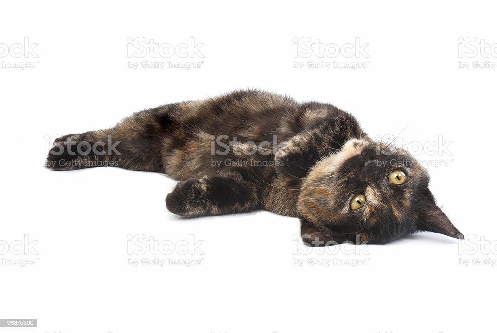 rolling kitten royalty-free stock photo