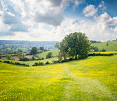 Rolling Landscape In The Cotswolds, England