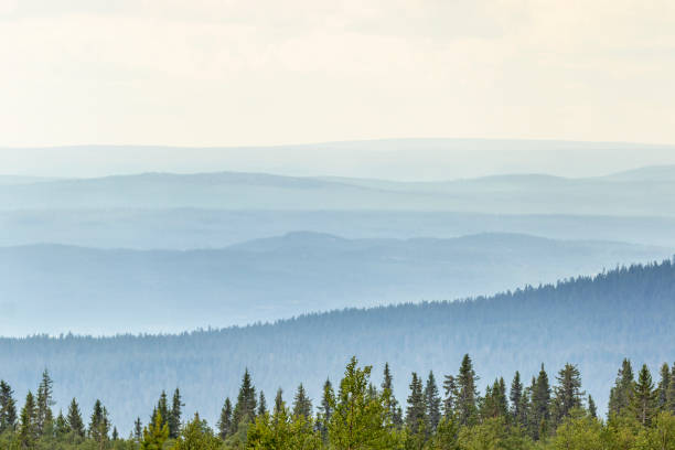 Rolling landscape view with shadings in the woods Rolling landscape view with shadings in the woods sweden stock pictures, royalty-free photos & images