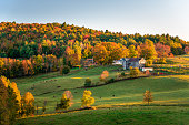 Farm with an old wooden barn and cows grazing in a field in a colourful autumnal rolling landscape at sunset. Woodstock, VT, USA.