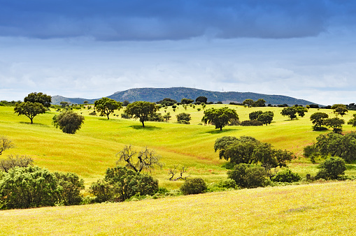 Beautiful rural landscape with cork trees and grassland in the Alentejo region of Portugal.