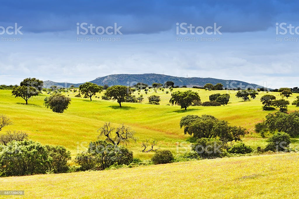 Rolling rural landscape with trees in Alentejo,Portugal stock photo
