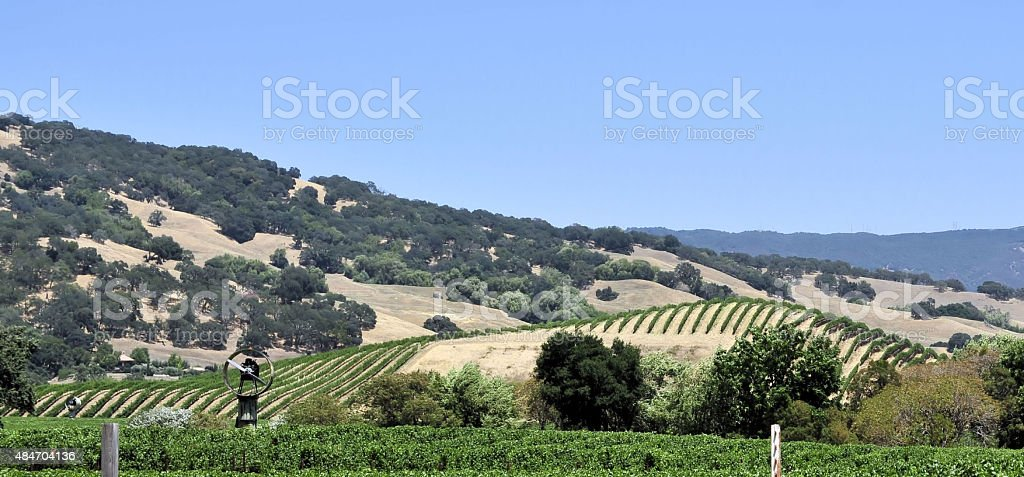 Rolling Vinyards stock photo