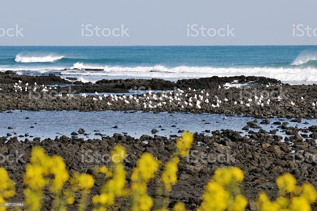 Rolling Waves and sea gulls stock photo
