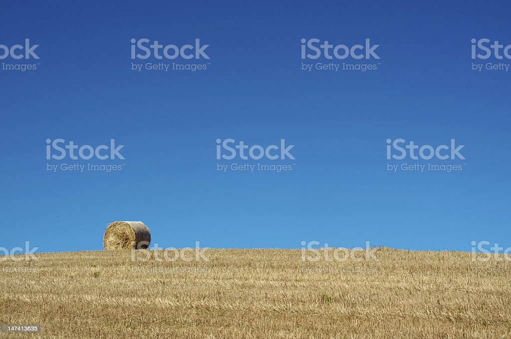 Rolling wheat royalty-free stock photo