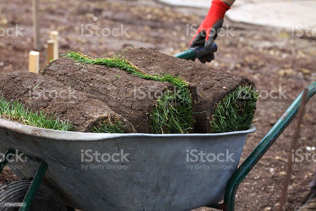 Rolls for installing new lawn and worker stock photo