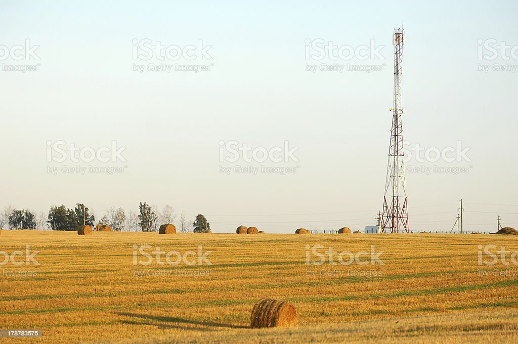 Rolls in a field royalty-free stock photo