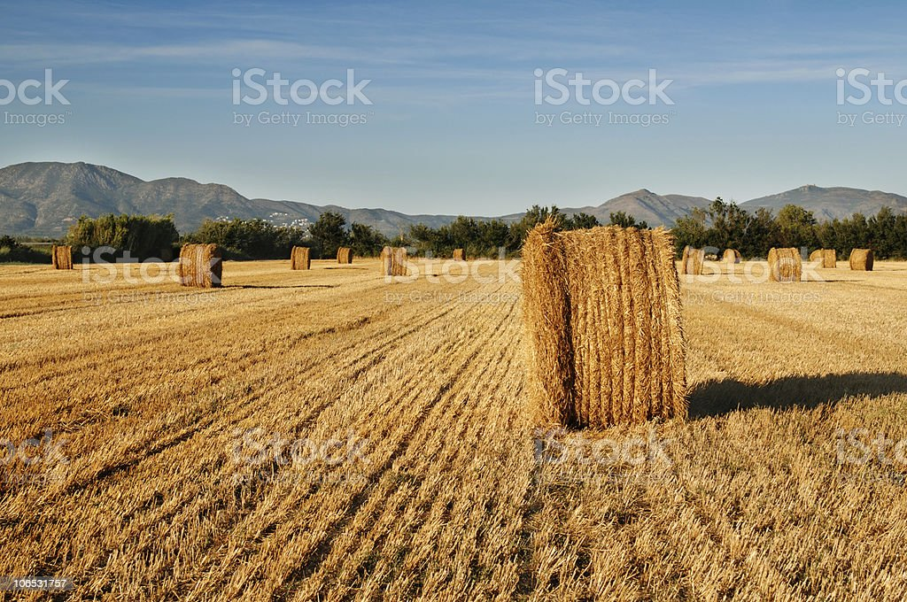 Rolls Of Hay Against Mountains Stock Photo Download Image