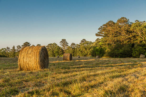 Rolls of Hay in Late Afternoon Sun – Foto