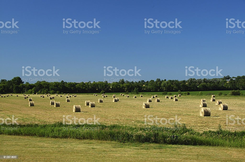Rolls of hay in the countryside stock photo