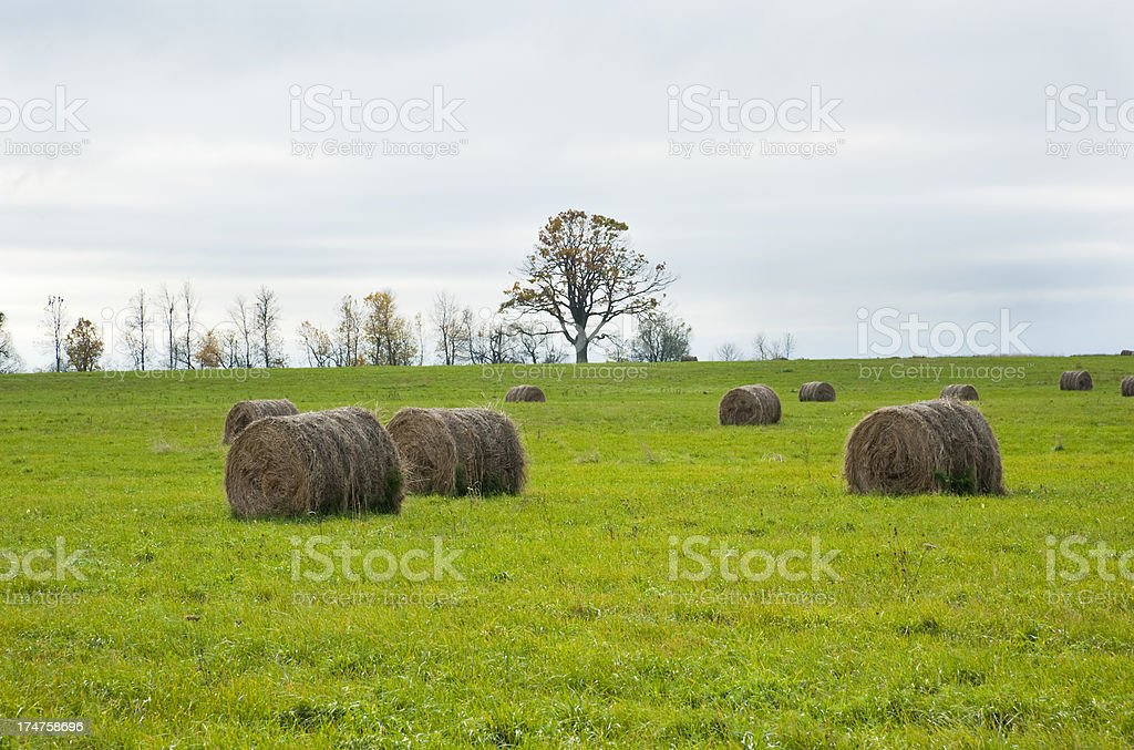 Rolls of Hay royalty-free stock photo