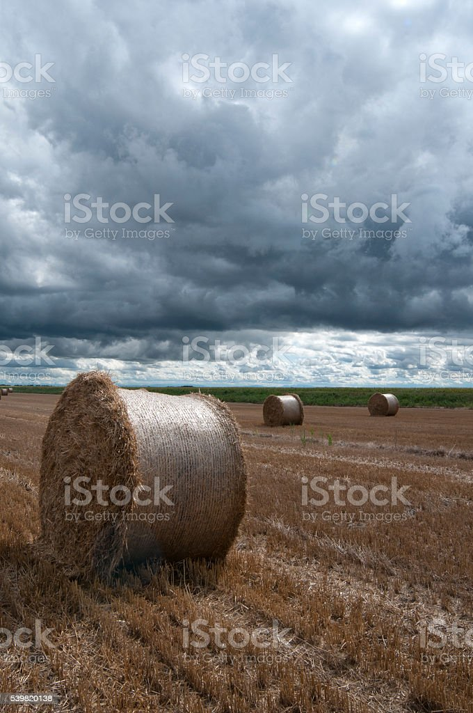 Rolls of straw stock photo