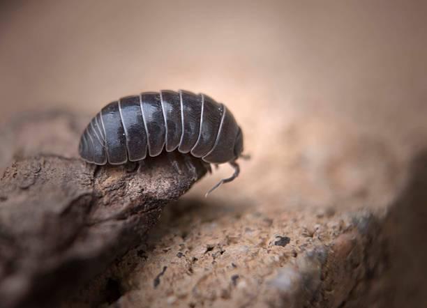 pupazzo poliestere bug guardando oltre il bordo - maialino foto e immagini stock
