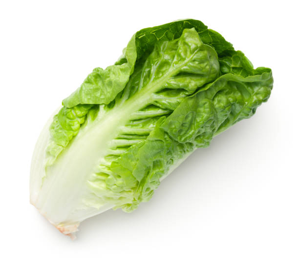 Romaine Lettuce Isolated On White Background Romaine lettuce isolated on white background. Baby cos. Top view romaine lettuce stock pictures, royalty-free photos & images