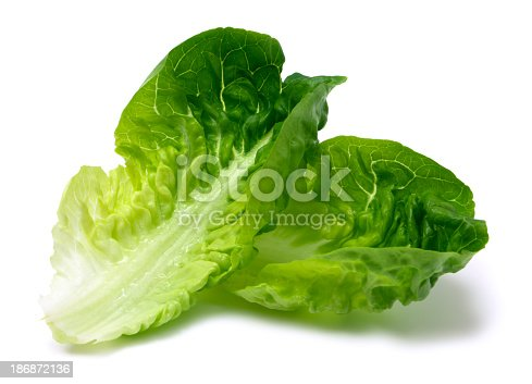 Romaine lettuce leaf isolated