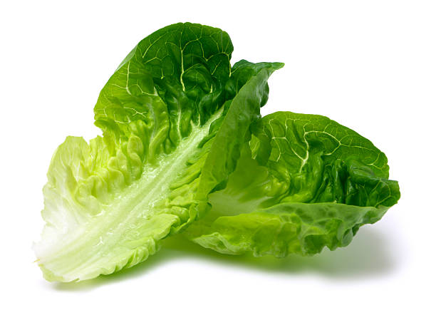 Romaine lettuce leaf stock photo