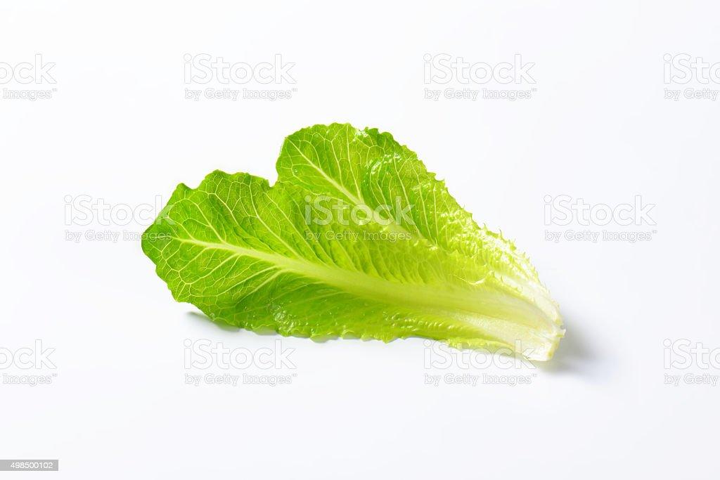 romaine lettuce leaves stock photo