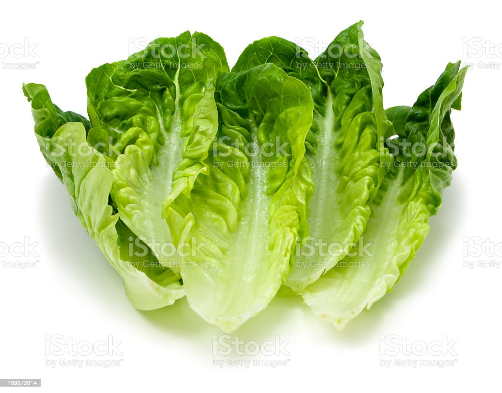 Romaine lettuce stock photo