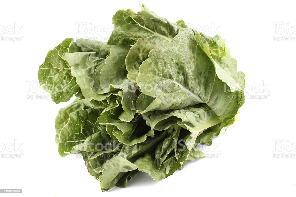 Romaine lettuce - Royalty-free Color Image Stock Photo