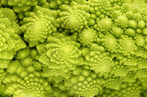 roman cauliflower - fractal stock photos and pictures