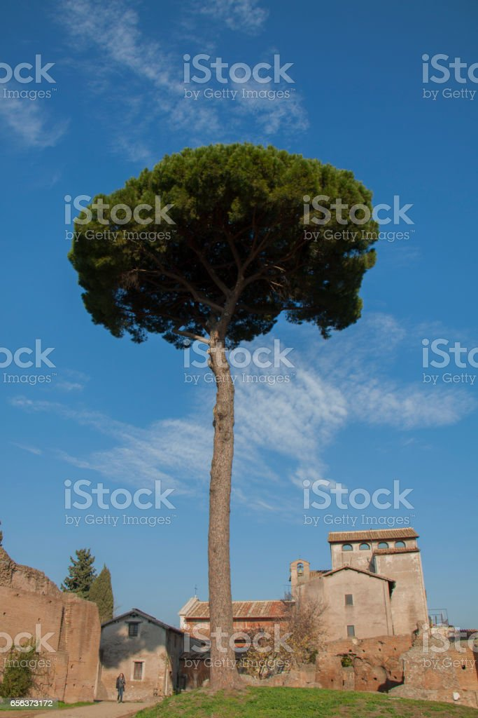 Roman Forum, pine стоковое фото