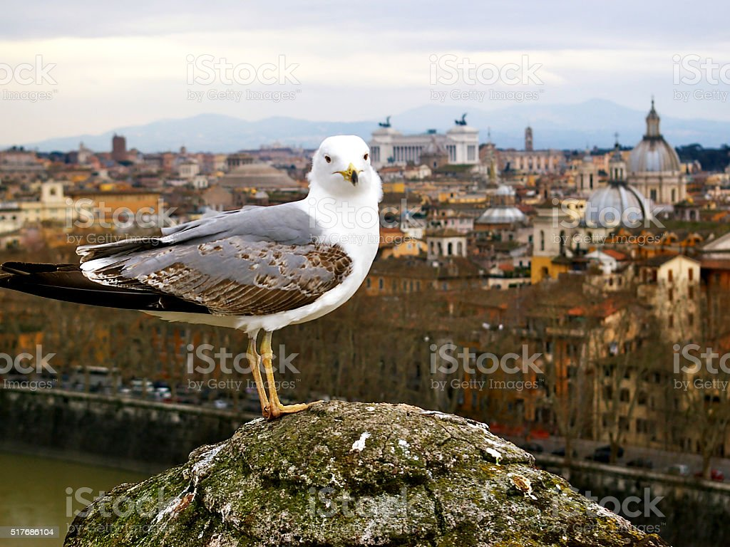 Roman Seagull stock photo