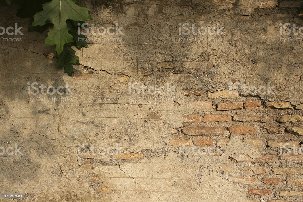 Roman wall with green leaf royalty-free stock photo
