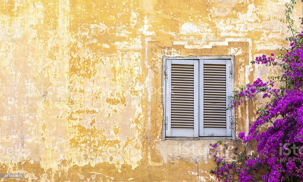 Roman wall with window and Bougainvillea, Rome Italy stock photo
