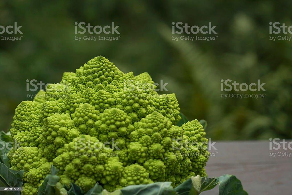 romanesco broccoli stock photo