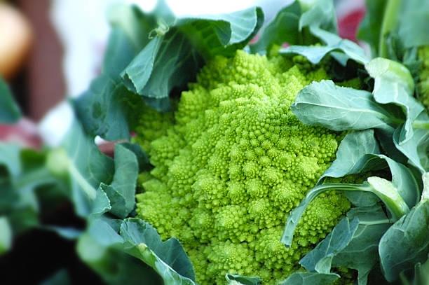 romanesco cauliflower stock photo