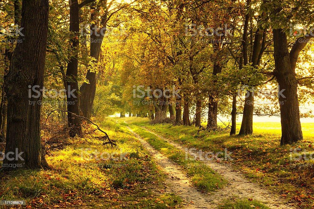 Ruelle romantique de l'automne - Photo