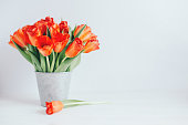 Romantic bouquet of bright red tulips in a vintage pot. Background or postcard. Place for text.
