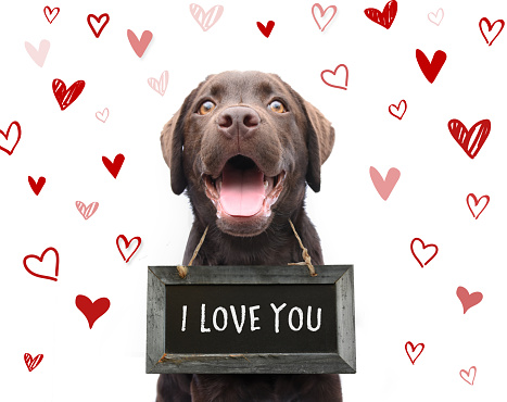 istock Romantic dog saying i love you, text on chalkboard with red hearts background animal love on valentines day 1070703372