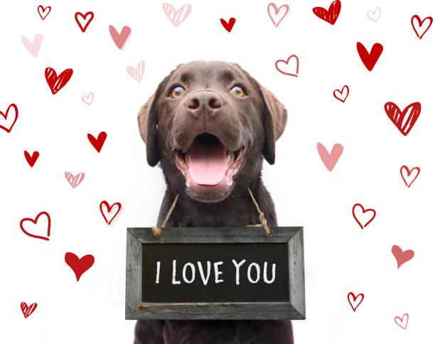 romantisk hund säger jag älskar dig, text på svarta tavlan med röda hjärtan bakgrund djur kärlek på alla hjärtans dag - animal doodle bildbanksfoton och bilder