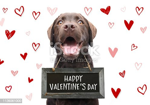 Cute dog with happy valentine's day text on black board with doodle hearts on white background