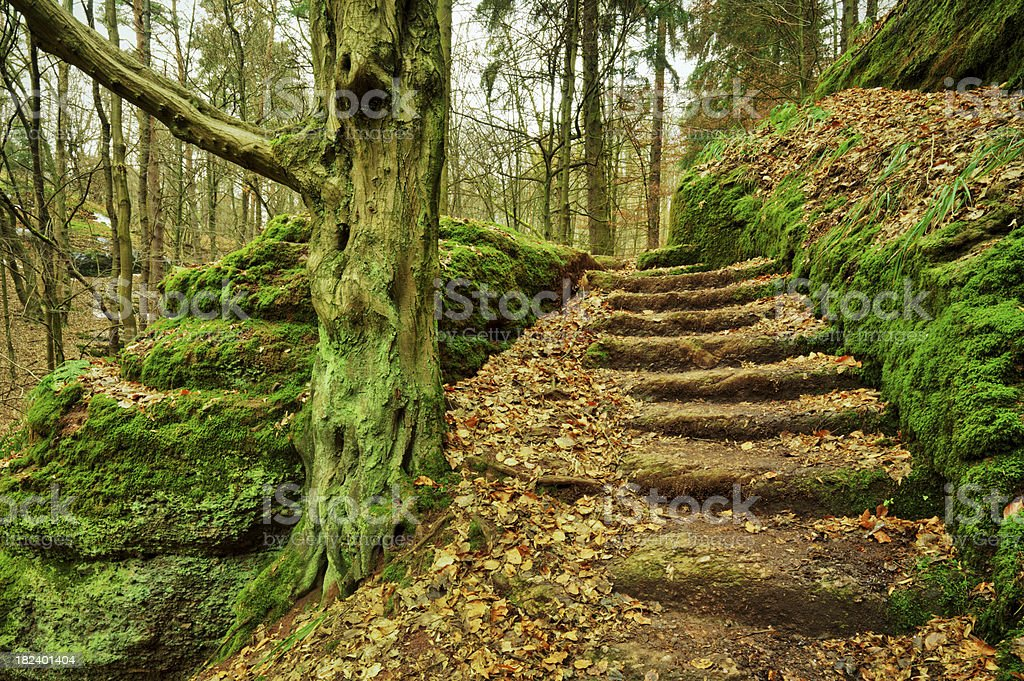Romantic Fairy Tale Forest royalty-free stock photo