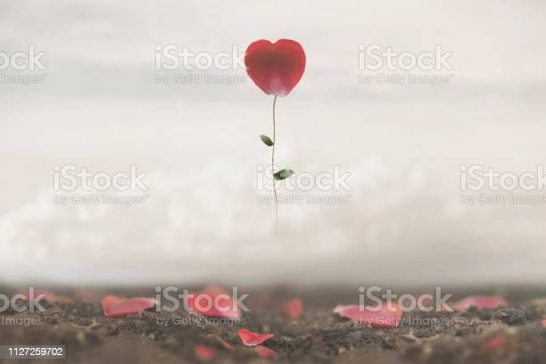 Romantic flower flies in the sky conceptual and surreal image of love picture id1127259702?b=1&k=6&m=1127259702&s=612x612&h=yfozhtcyqxsmtsydfzxhatrgmsyt0vp5 qr2qbhcc1u=