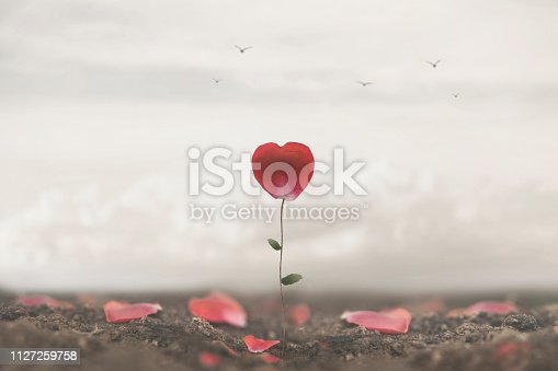 istock romantic flower made to heart symbol of love and freedom 1127259758