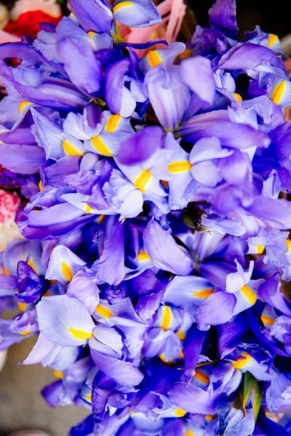 Romantic flowers stock photo