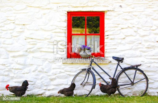 romantic idyll in a village in Ireland: chickens in front of a cottage with a red window and an old  bike